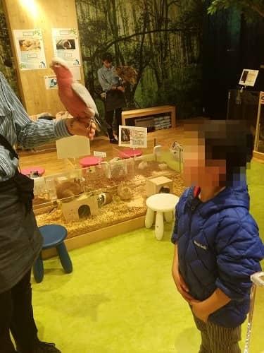 エキスポシティ・オービィ大阪のアニマルワールド