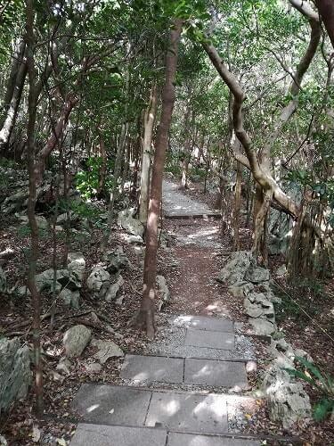 大石林山のコースの歩道