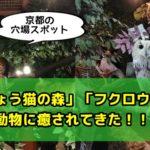 猫カフェ?「京都ひょう猫の森」と「フクロウの森」の体験感想レビュー